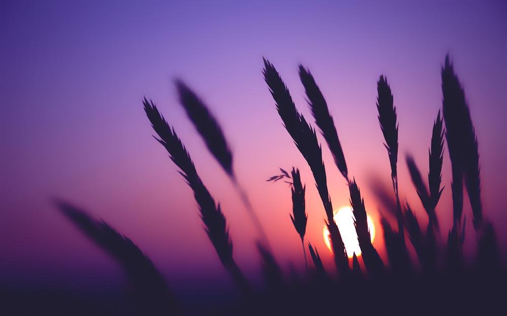 874746-purple-dusk-wallpaper-kopie